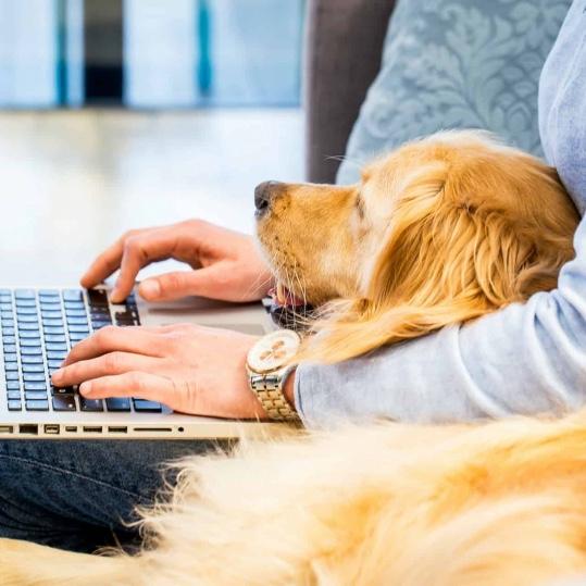 Homepage Dog